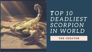 Download Top 10 Deadliest Scorpion In the world || THE CREATOR Video