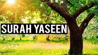 Ending Of Surah Yaseen (Emotional)