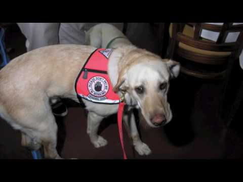 How hearing dog works
