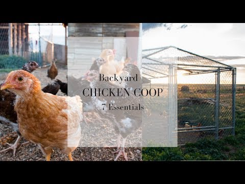 7 Essentials for the Backyard Chicken Coop | Raising Chickens for Eggs