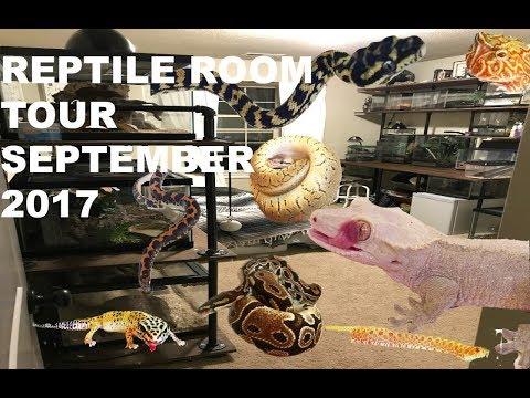 Reptile room tour September 2017