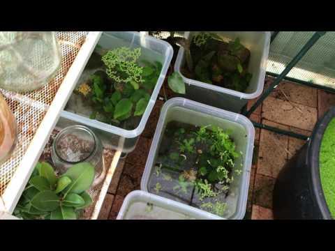 Aquarium green house plants