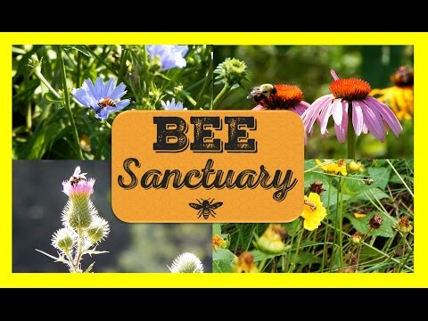 Make a Bee Meadow! Save the Bees!