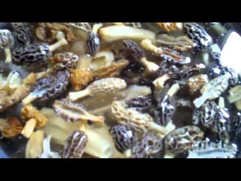 Mushroom hunting in the Hoosier state.