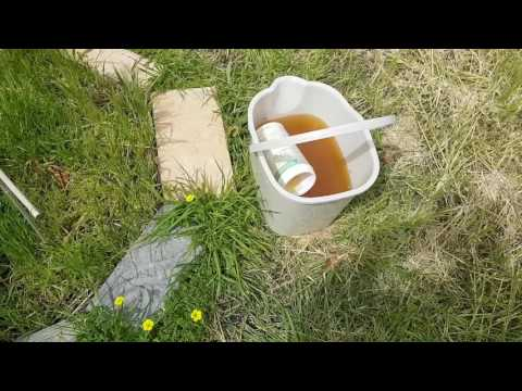 HOW TO KILL WEEDS WITH YOUR OWN URINE