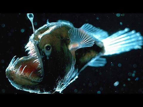 Top 10 Scariest Fish
