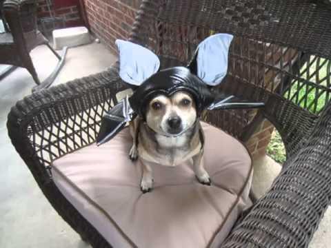 ✔  BAT Costume --- $4.99