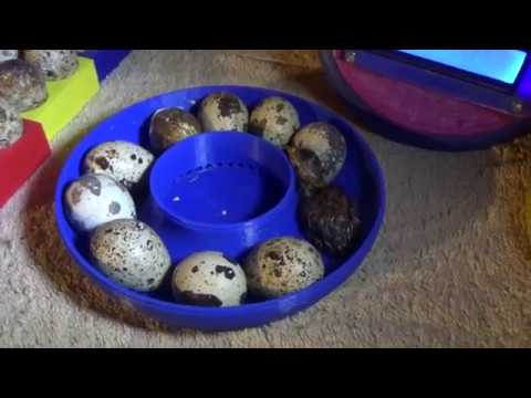 Project Update - Quail Egg Incubator