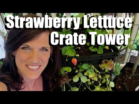How to Make a Strawberry Lettuce Crate Tower, Growing Vertically//Small Space Garden Series #4