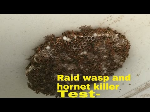 Raid! wasp and hornet killer spray/wasp nest removal