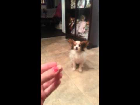 How to get your dog to take his flea medication