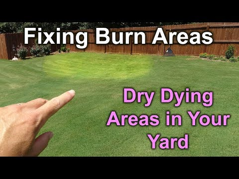 Fix Brown Burn Out and Dry Spots in BermudaGrass