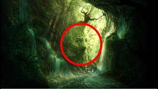 World's Most Mysterious Forest That Science Can't Explain