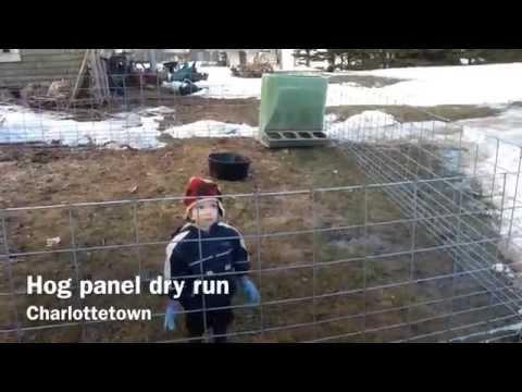 Hog panel dry run - Testing out hog panels for raising pigs
