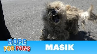 Homeless dog fights us even though he was badly injured!