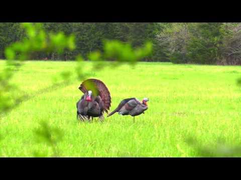 Rehab Field Turkey Hunt Kemper County, MS...