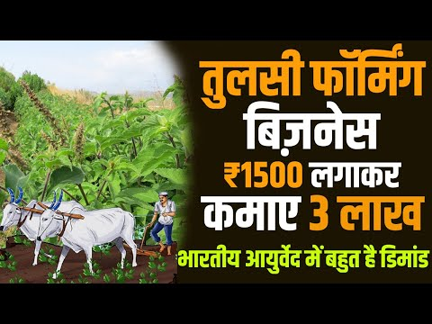 HOW TO START TULSI FARMING BUSINESS IN INDIA | EARN UPTO 3 lac in Just 15000