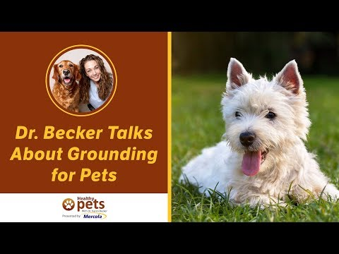 Dr. Becker Talks About Grounding for Pets