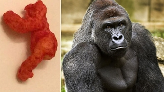 Harambe Cheeto Sells For Almost $100,000 on eBay?! | What