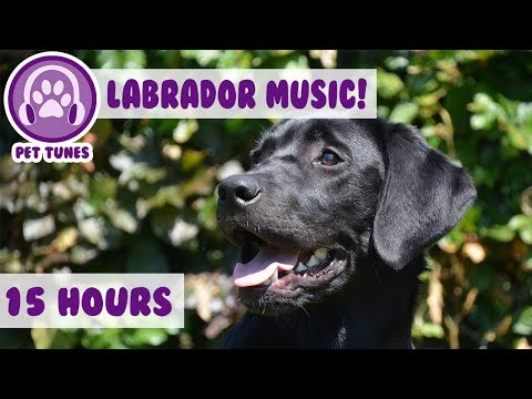 New! Pet Therapy Music for Labradors! Relax My Labrador In My House! Help Over 4 Million Dogs! 🐶💤