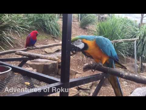 Walk in Exotic Parrot Aviary