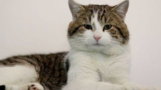 Twitter Falls In Love With #Brexit Cat   What's Trending Now