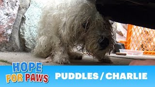 A sad and scared dog almost got a heart attack when he saw them!