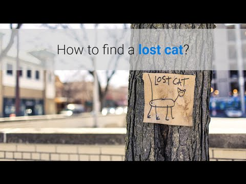 How to find a lost cat?