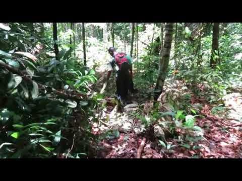 Walk In Amazon Jungle-Rio Javari