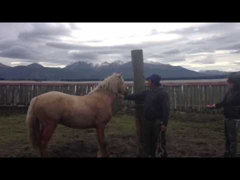 Puerto Williams- catching a wild horse
