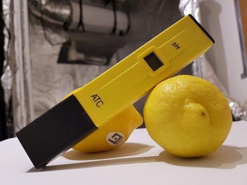 PH Wert mit Zitrone korrigieren