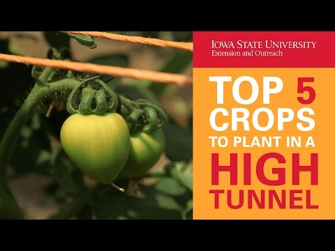 Top 5 Crops to Plant in a High Tunnel