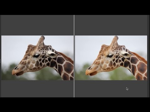 Digital Photo Professional (DPP) 4: Using DPP 4 to fix common problems