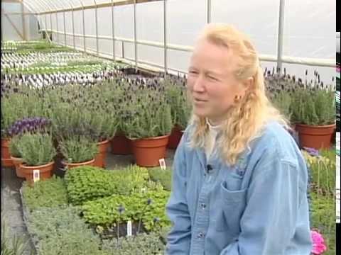 Herb Nursery Rosie Sullivan
