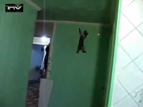 Cat walking on wall