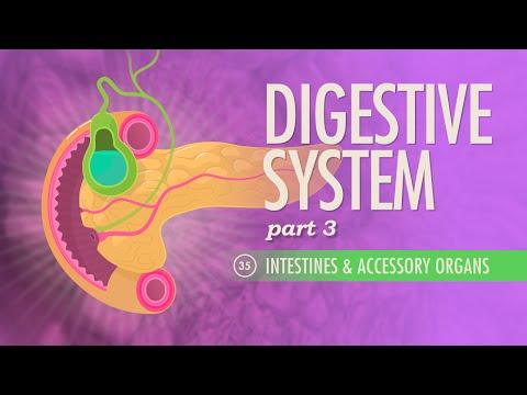 Digestive System, part 3: Crash Course A&P #35