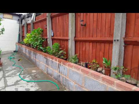 How to keep cats out of garden yard plants raised flowerbed