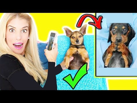i Tried RECREATiNG Adorable MEMES with my DOGS!