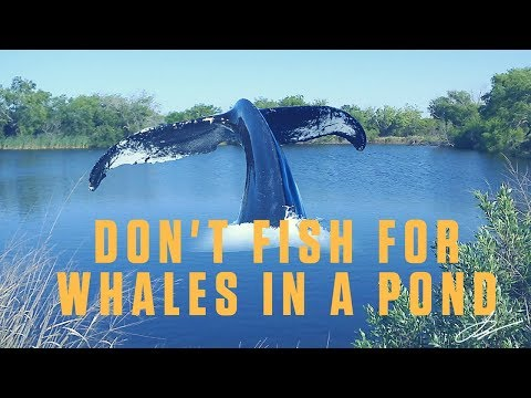 NICHE MARKETING WILL HELP YOU GROW - PROJECT MANAGEMENT - DON'T FISH FOR WHALES IN A POND -