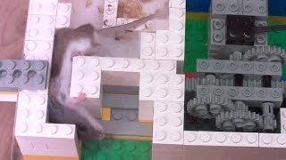 Mouse gap squeezer teaser machine