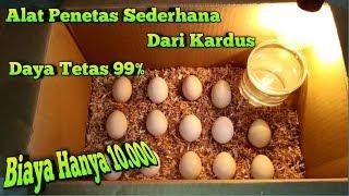Alat Tetas Telur Ayam Sederhana Dari Kardus