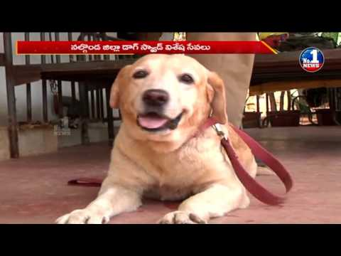 Outstanding Performance Of Nalgonda Dog Squad In Catching Criminals || No.1 News