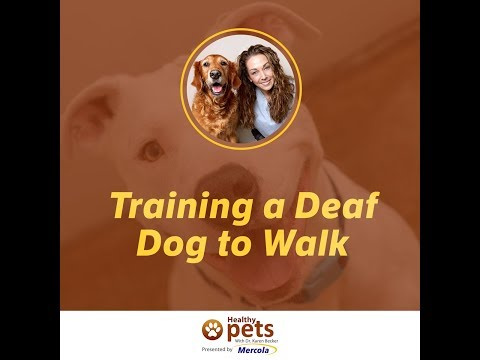Training a Deaf Dog to Walk