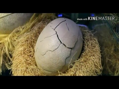 Xxx Mp4 Percaya Gak Percaya Telur Naga Ini Menetas 3gp Sex