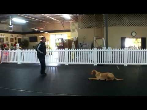 Wounded Warrior's Pet Dog Trained as PTSD Service Dog, Charlotte North Carolina