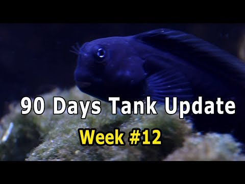 90 Days Update, After white spot Treatment, Week #12 | HOW TO Cycle Reef Tank