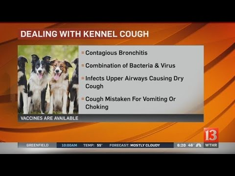 Pet Vet: Dealing with kennel cough
