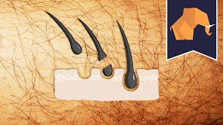 Does hair grow back THICKER if you shave or pluck?
