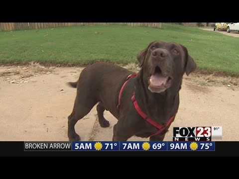 Microchip reunites dog, family 2 years later