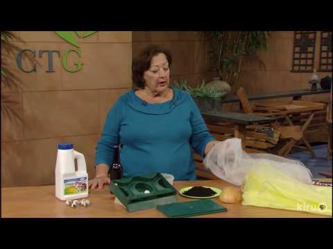 Control Slugs, Snails, Squash Vine Borers |Trisha Shirey |Central Texas Gardener